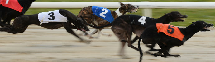 greyhound betting picture